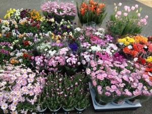 花市場での仕入れ