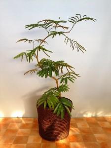 観葉植物を買うとき