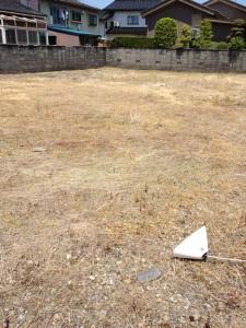 除草剤散布から1ヶ月後