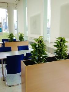 観葉植物のレンタル納品