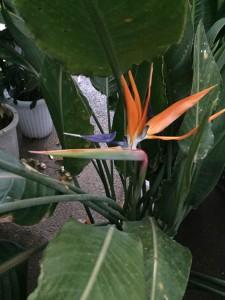 ストレッチャーの花