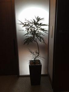 観葉植物レンタル003