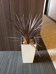 観葉植物レンタル005