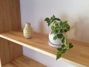 観葉植物2