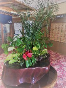 寄せ鉢の観葉植物レンタル1